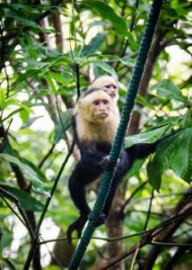 Non-profits that put up monkey bridges