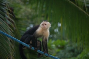 monkey-bridge-costa-rica